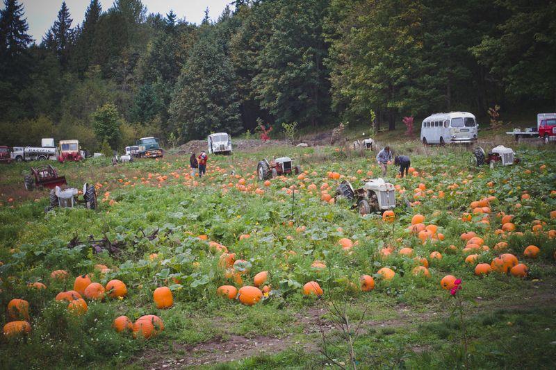 Pumpkins-6866