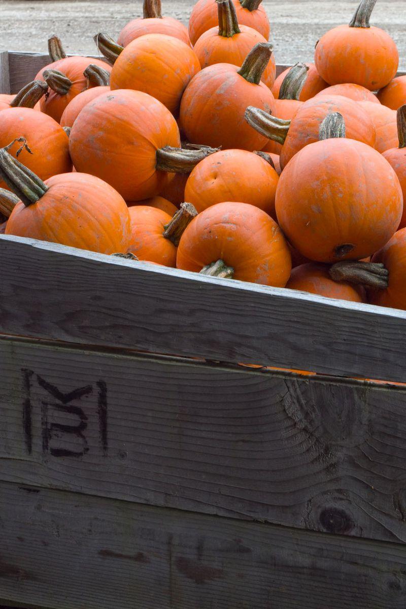 Pumpkins-6856